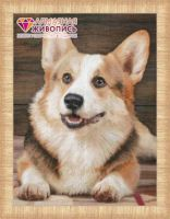 "Diamond painting ""Corgi"" - 40 x 30cm"